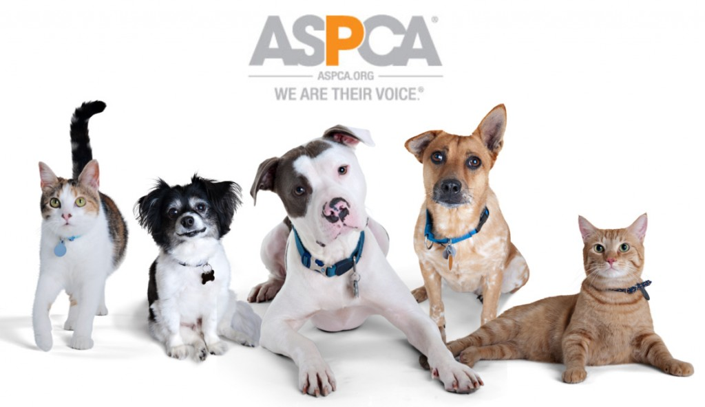 The Maize Foundation and ASPCA